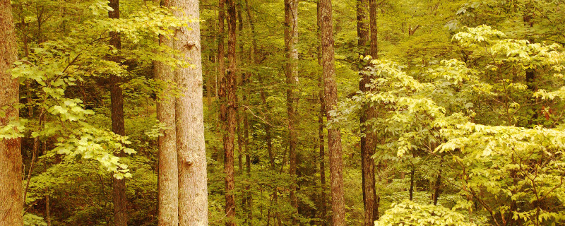 Nantahala National Forest Trees